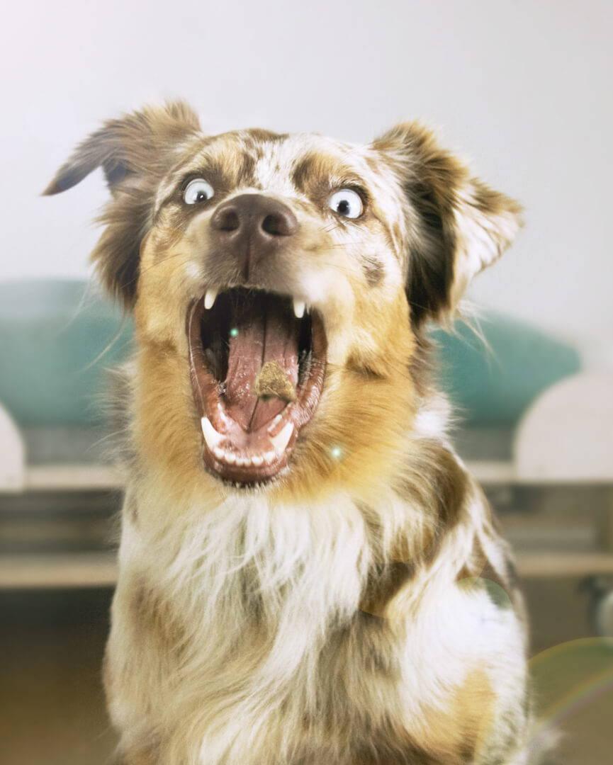 Hundebedarf Trockenfutter Tales&Tails