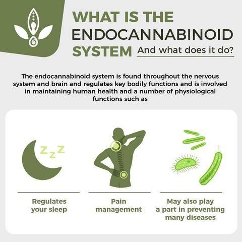 endocannabinoid system new zealand