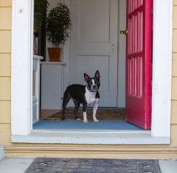 dog in doorway