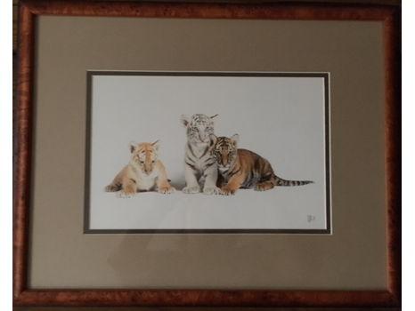 """Framed Print of Tiger Cubs (19"""" x 15"""")"""
