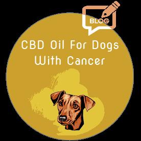 crayolex-hemp-cbd-dog-cancer