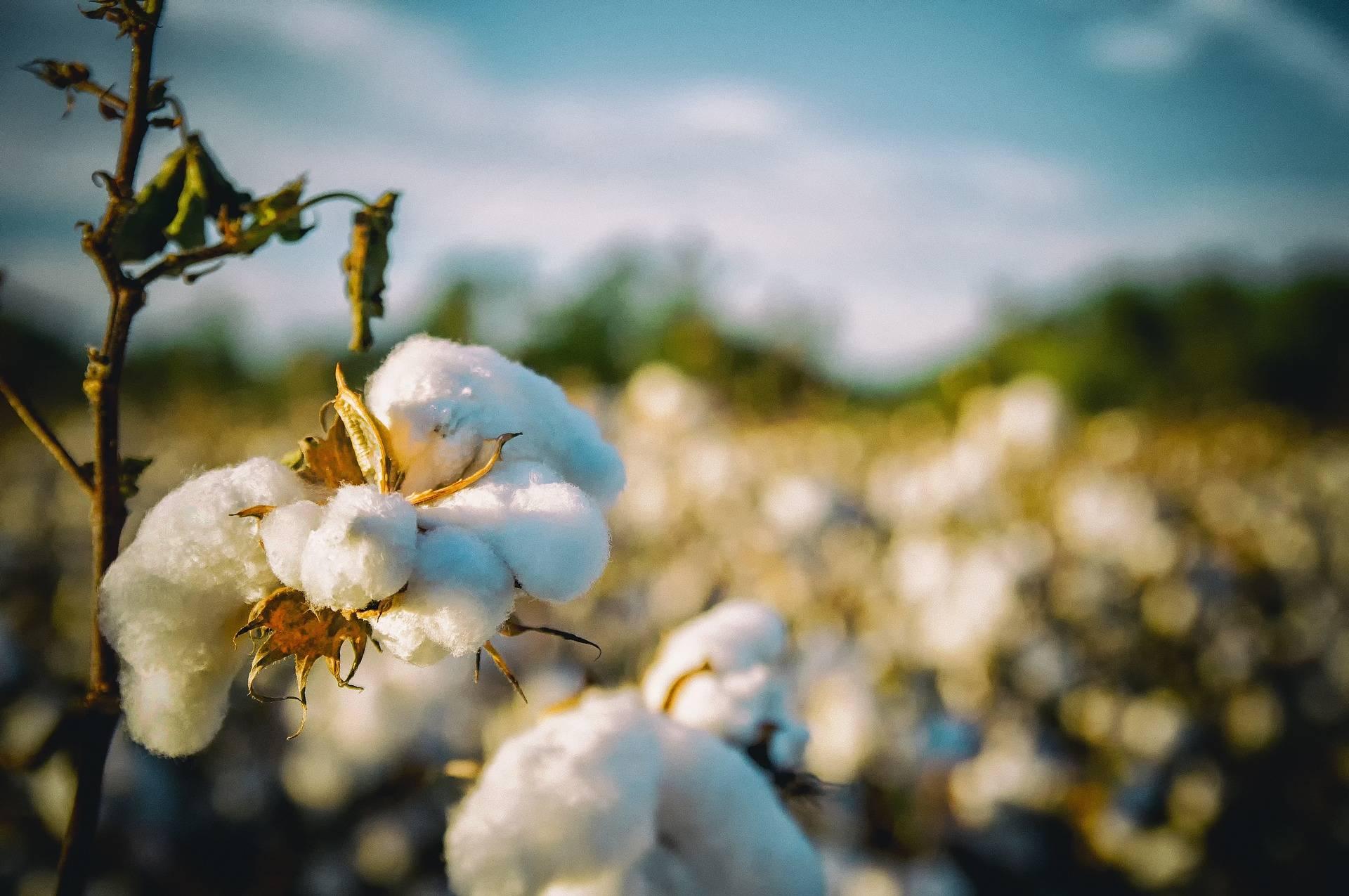 Faire Kleidung 100% Bio-Baumwolle