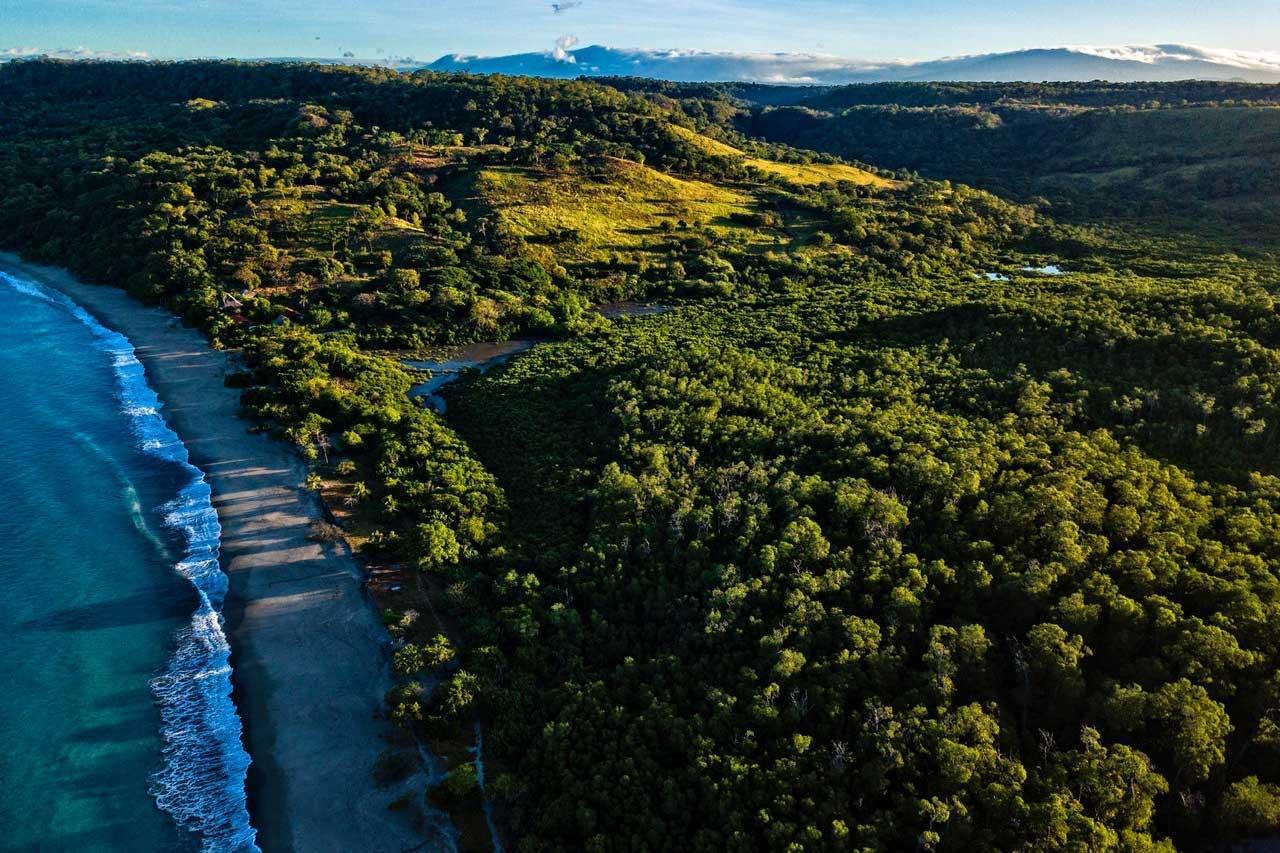 BeanBear Costa Rican coastline