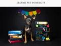 Hawaii Pet Portraits
