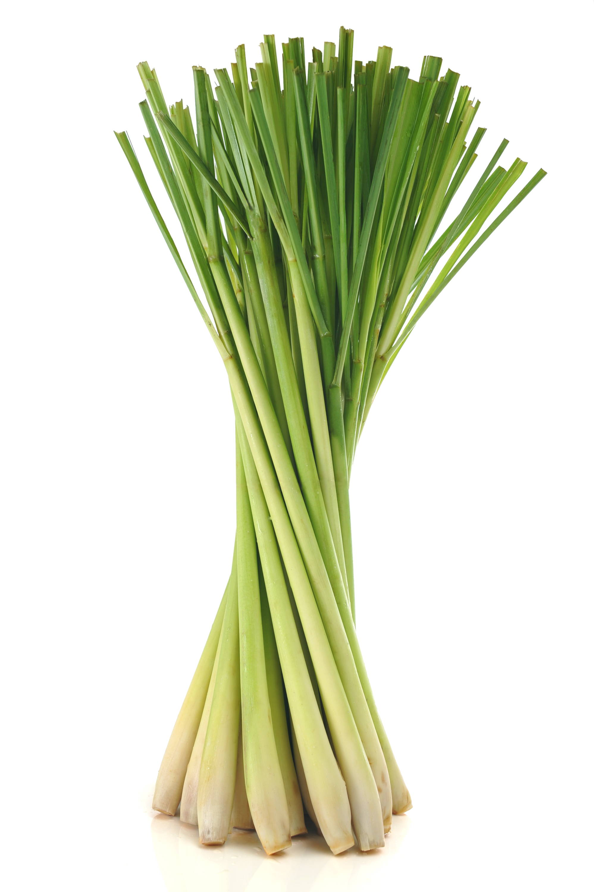 Lemongrass, essential oils blog, satopradhan vison