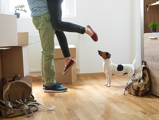 Hamburg - Worried about how your pet will handle moving house? Try these tips to help them adjust.