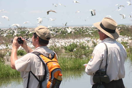 Bird Watching Tour at Rio Savane