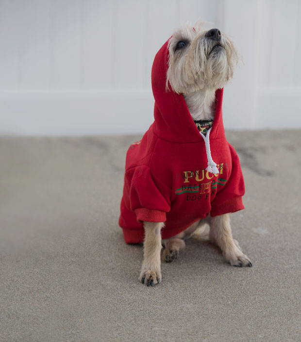 Fresh Pawz Dog clothing showing a red pawmain pucci red dog hoodie on a small dog.