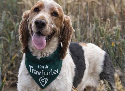 Travelling dog with green dog bandana