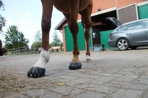 Klebebeschlag, Kunststoffbeschlag, Pferd, Hufe, Goodsmith