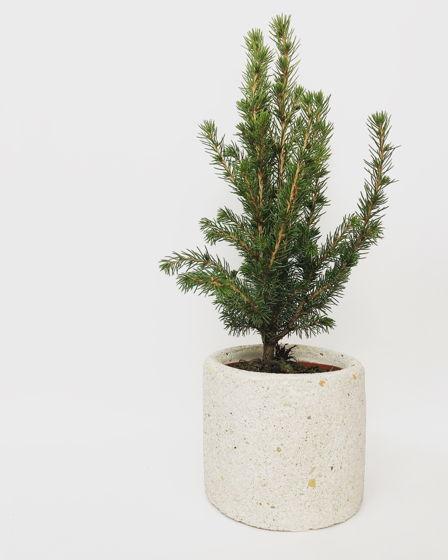 Декоративная живая ёлочка в текстурном кашпо из бетона с галькой