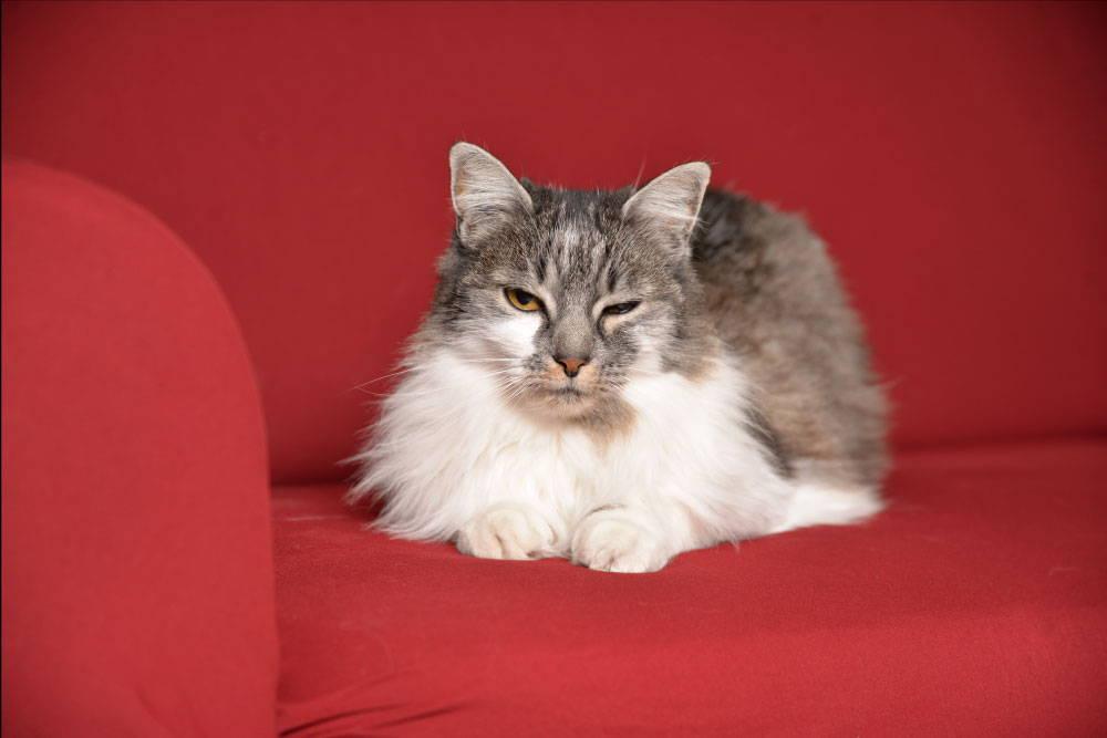 griffes de chat housse canapé