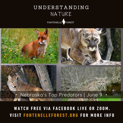 Picture of Learn about the top predators of Nebraska and where they live.