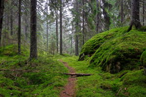 Hike in Estenstadmarka