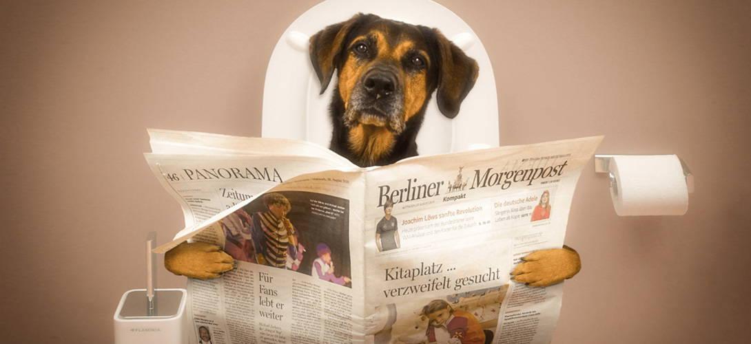 Der Hund Hat Durchfall Ursachen Und Tipps Zur Behandlung