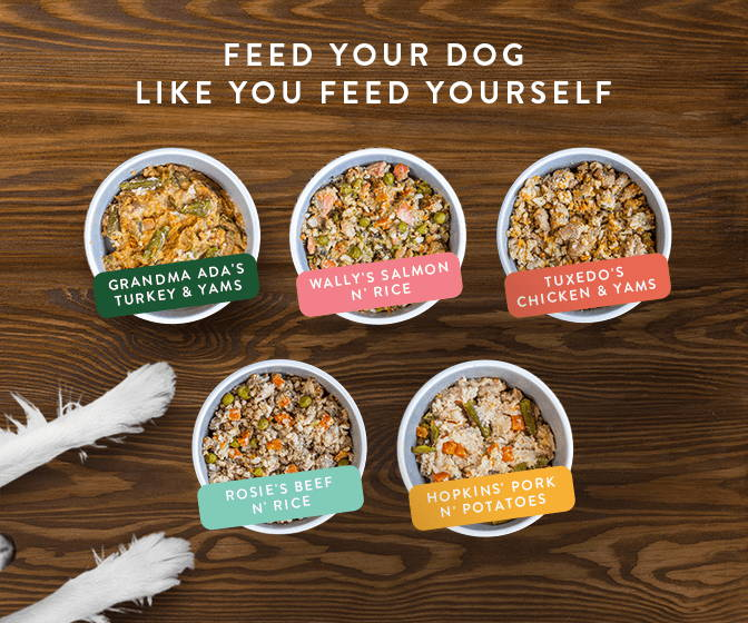 All five varieties of Portland Pet Food's dog food toppers and mixers made for picky dogs