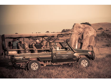 LIVE AUCTION PREVIEW: Discover East Africa on an 11-Night Journey with WildAid
