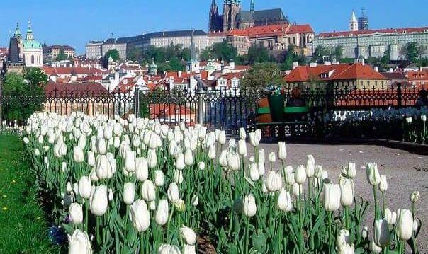 Трёхчасовая обзорная экскурсия по Праге