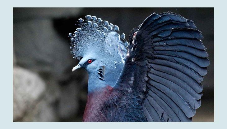 zoom erlebniswelt vogel