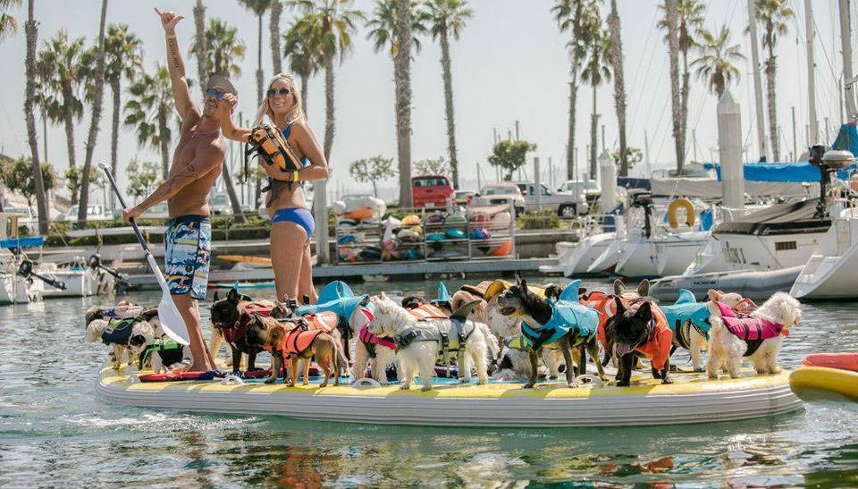 the french brigade breaking the world record for most dogs on paddle board