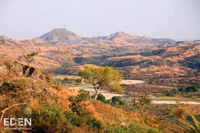 waldsterben-in-armen-regionen