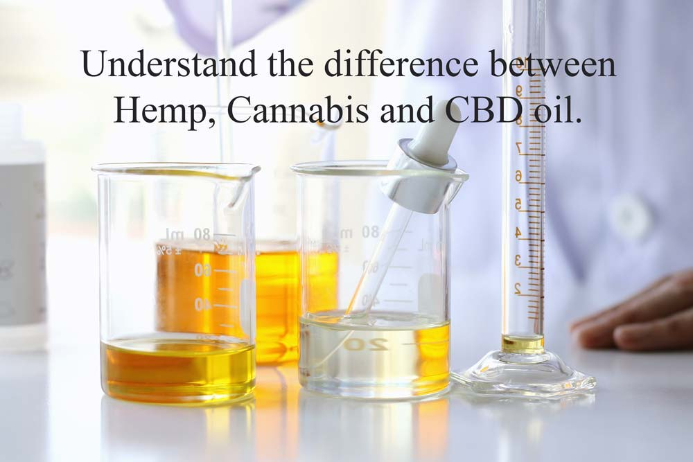 cannabis, hemp and CBD oil
