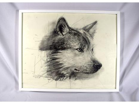 Original Wolf Drawing by Douglas Miller