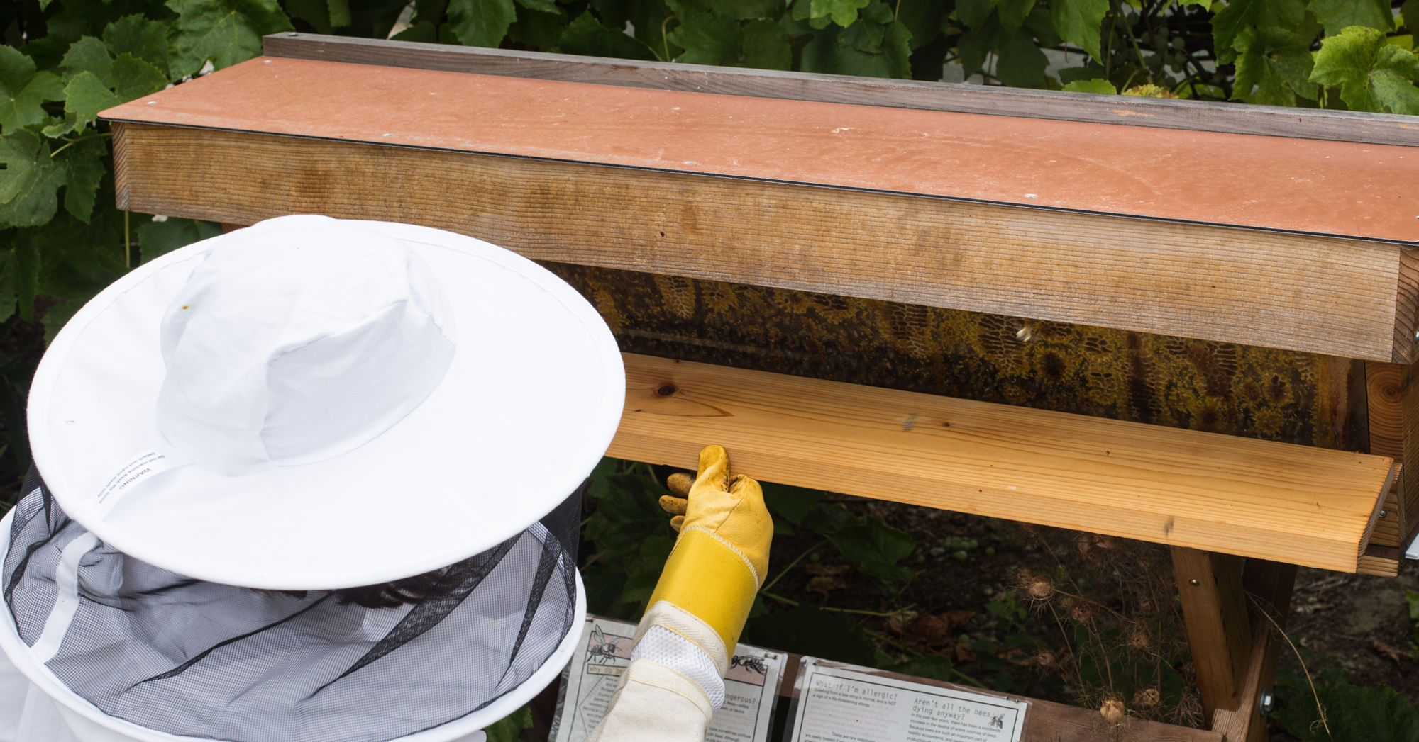 Our Top Bar Hives Have 3 Entrances On The Backboard Of The Hive Body To  Allow Beekeepers To Expand Their Hive In The Direction Most Convenient To  Them.