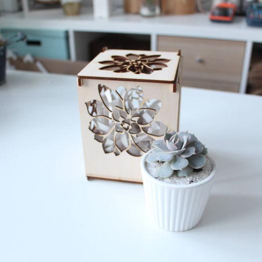 """Коробочка """"Ажур"""" с суккулентом в керамике"""