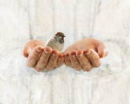 A sparrow rests in Jesus' hands.