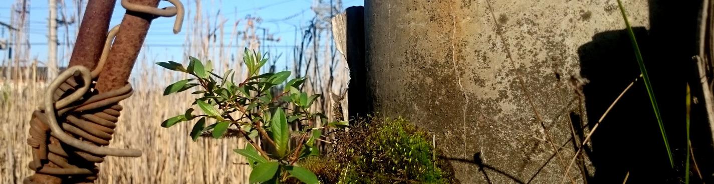От серого к зелёному — экология промышленного пояса
