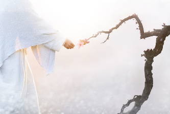 Jesus' hand touching the end of a dead branch. Where HIs fingers touch, pink blossoms begin to sprout.