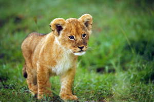 Meet baby animals at Nairobi National Park