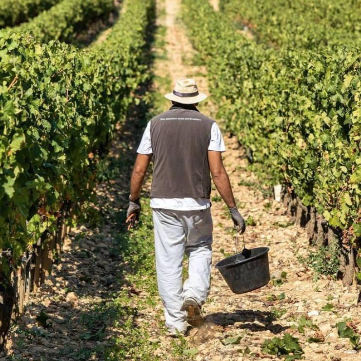 France, vin nature, rawwine, organic wine, vin bio, vin sans intrants, bistro brute, vin rouge, vin blanc, rouge, blanc, nature, vin propre, vigneron, vigneron indépendant, domaine bio, biodynamie, vigneron nature, cave vin naturel, cave vin, caviste, vin biodynamique, bistro brute, Quimper, Finistère , laurent combier, clos des grives, rhône, crozes-hermitage