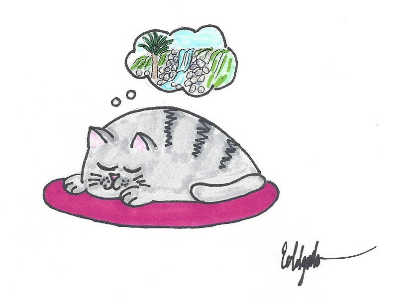 drawing cat dreaming of waterfall