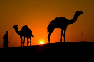 Ride on a camel into the sunset in the Desert