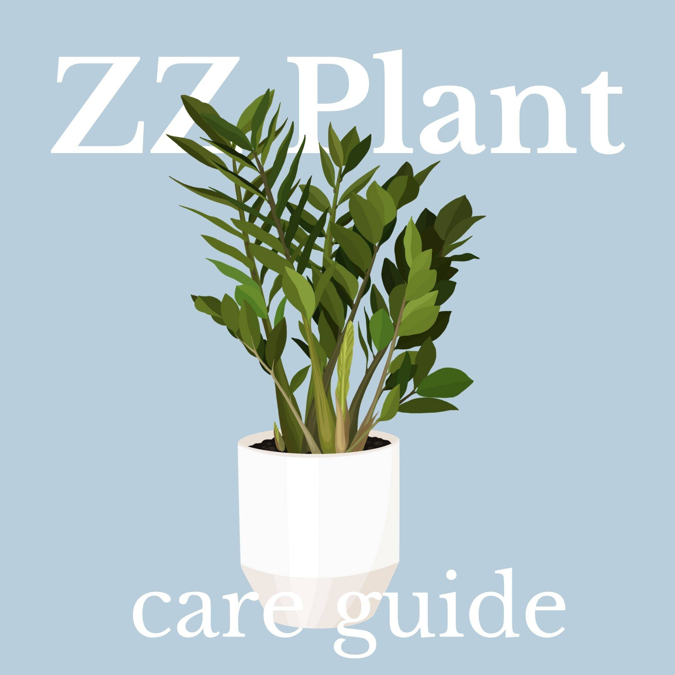 Drawing of zz plant