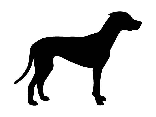 Abbildung: untergewichtiger Hund