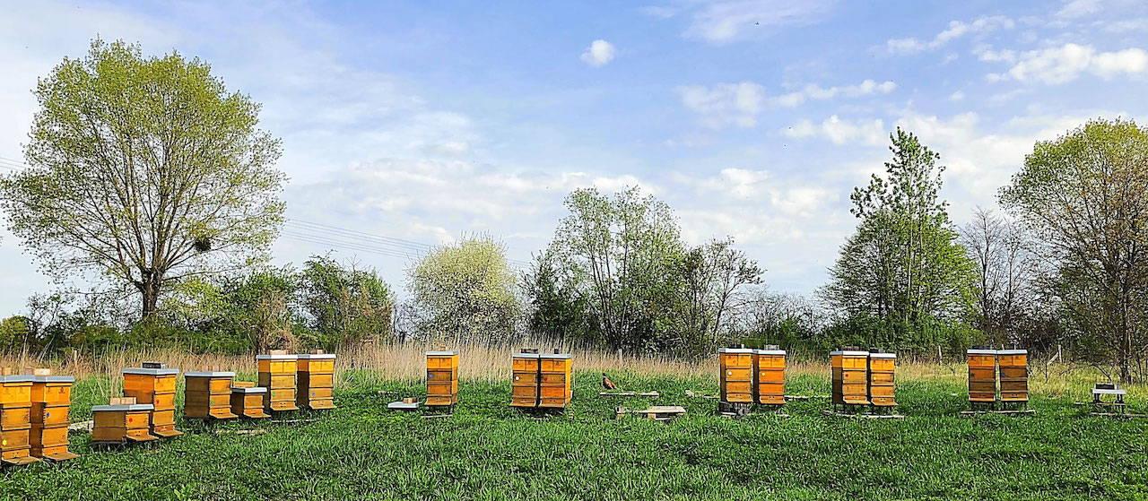 Bienenvölker in der Stolper Heide mit Fasan auf Europalette