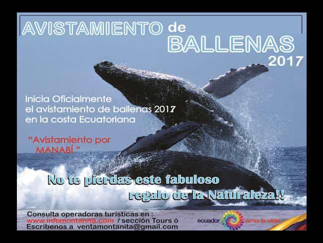 Comienza Oficialmente el Avistamiento de Ballenas 2017 !!-Montañita