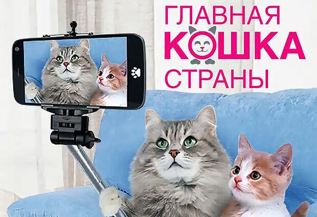 Прием заявок на конкурс «Главная кошка страны» от «Радио Дача» продолжается