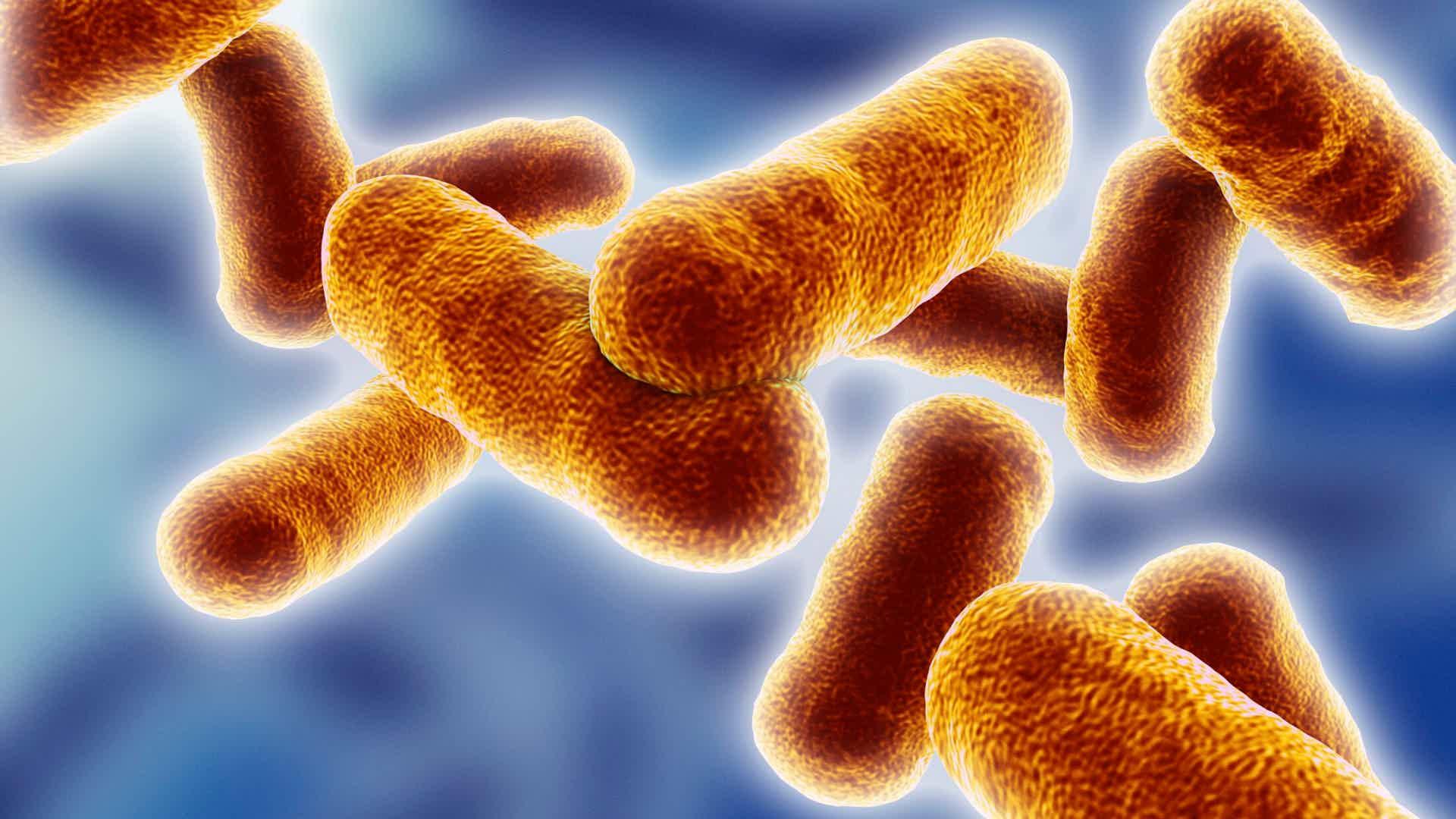 Benefits of Probiotics - auto