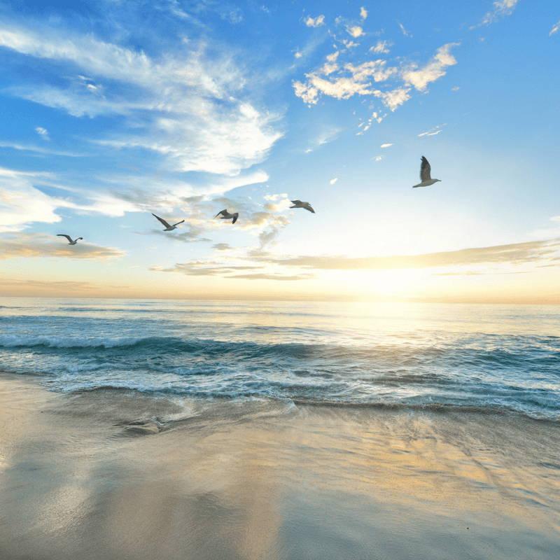 Air, Birds Flying, Ocean View
