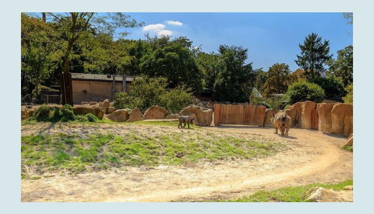 zoo krefeld außenanlage savanne