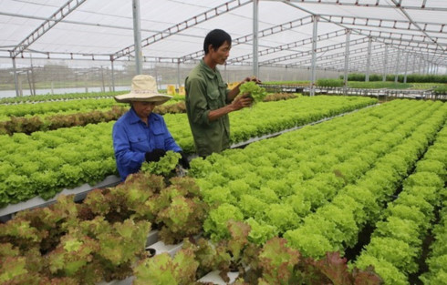Vietnam works to boost organic farming
