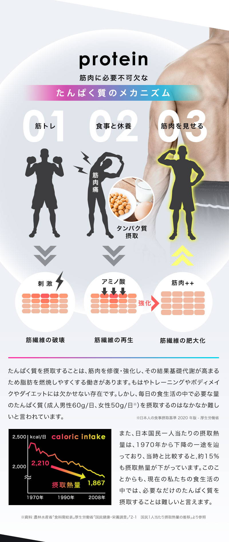 protein 筋肉に必要不可欠なたんぱく質のメカニズム 筋トレ 食事と休養 筋肉を見せる 筋肉痛 タンパク質摂取 刺激 アミノ酸 筋肉++ 筋繊維の破壊 筋繊維の再生 筋繊維の肥大化 たんぱく質を摂取することは、筋肉を修復・強化し、その結果基礎代謝が高まるため脂肪を燃焼しやすくする働きがあります。もはやトレーニングやボディメイクやダイエットには欠かせない存在です。しかし、毎日の食生活の中で必要な量のたんぱく質(成人男性60g/日、女性50g/日)を摂取するのはなかなか難しいと言われています。※日本人の食事摂取基準2020年版-厚生労働省 また、日本国民一人当たりの摂取熱量は、1970年から下降の一途を辿っており、当時と比較すると、約15%も摂取熱量が下がっています。このことからも、現在の私たちの食生活の中では、必要なだけのたんぱく質を摂取することは難しいと言えます。※資料:農林水産省「食糧需給表」厚生労働省「国民健康・栄養調査」「2-1 国民1人当たり摂取熱量の推移」より参照
