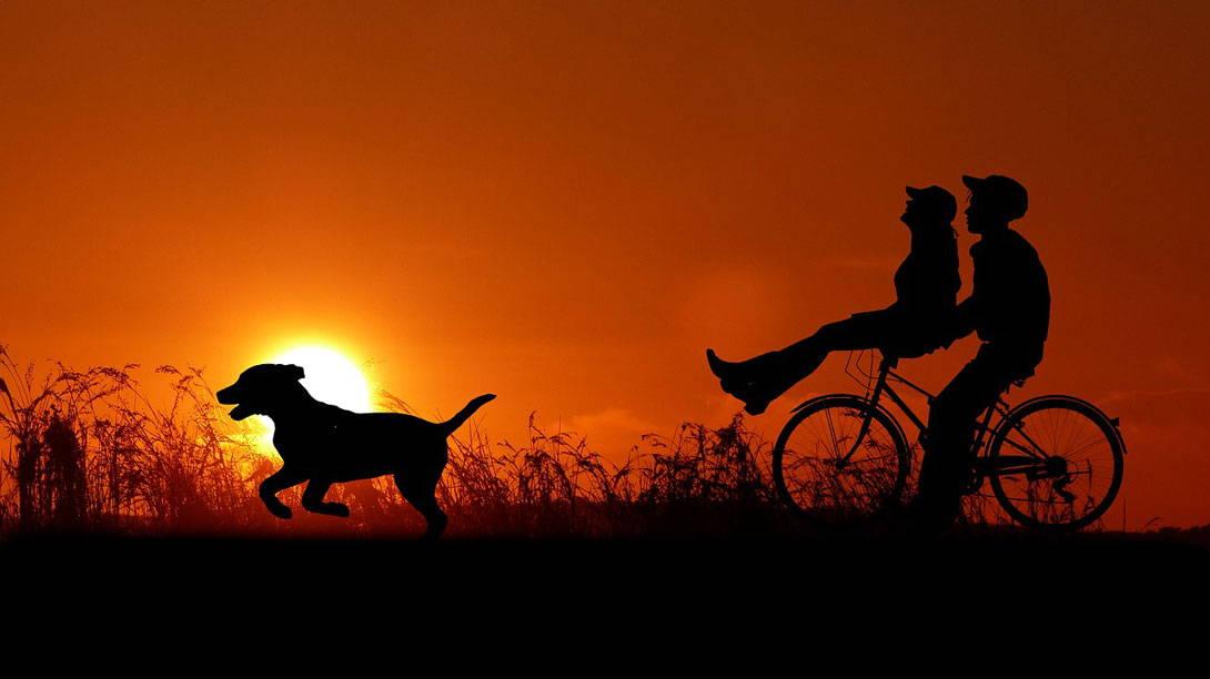 Radfahren mit dem Hund - ist das sinnvoll?