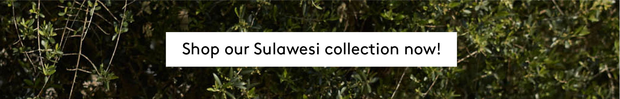 Shop our SULAWESI collection now!