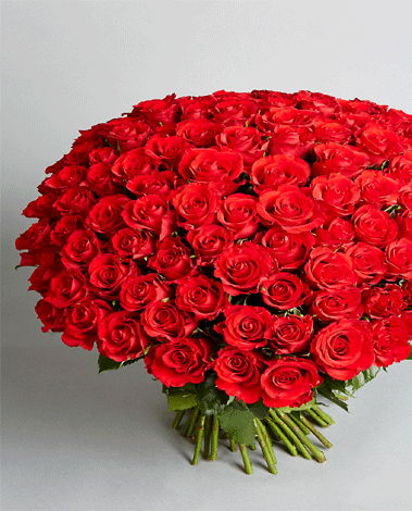 hf Beautiful Red Roses