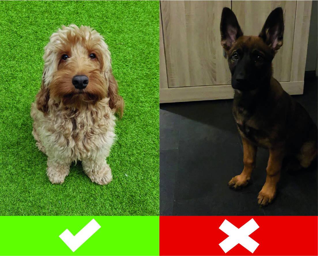 Huisdieren portret fotorichtlijnen